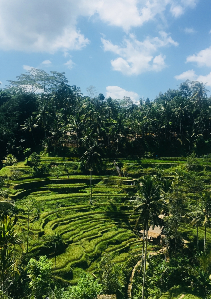 PHOTO DIARY #5 A WEEK IN BALI,INDONESIA